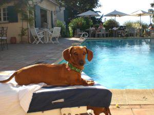 zwembad voor je hond